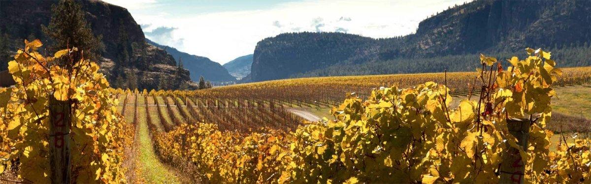 banner-okanagan-okfalls-vineyards.jpg