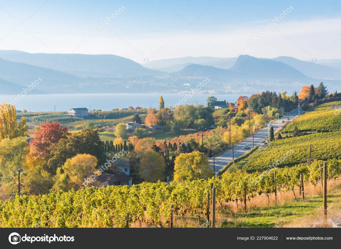 depositphotos_227904622-stock-photo-view-vineyards-naramata-road-naramata.jpg