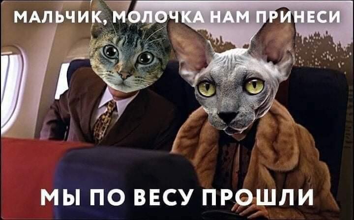 FB_IMG_1574055079160.jpg