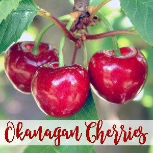 okanagan-cherry-fruit.jpg