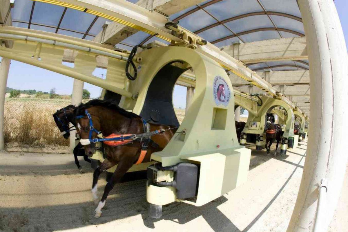 The-horse-training-system-could-be-the-first-useful-monorail-1413268367_1352x900.jpg